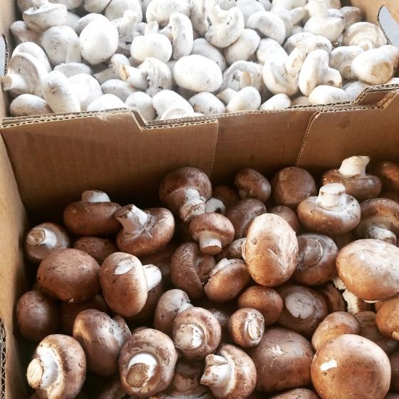Cream of Mushroom Soup Recipe Mushrooms